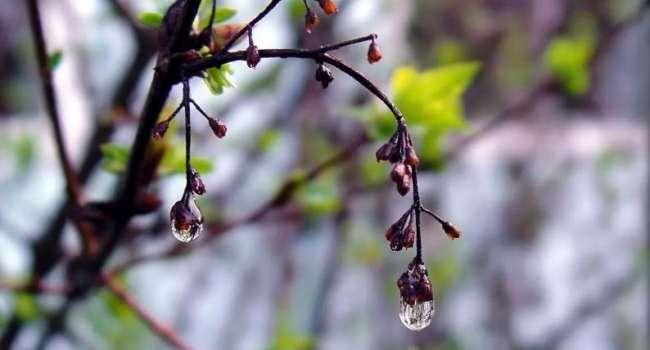 «Дожди и прохлада»: синоптики рассказали о погоде 18 апреля и дальнейшем похолодании