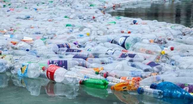 В Якутии обнаружили жуков, умеющих перерабатывать пластик