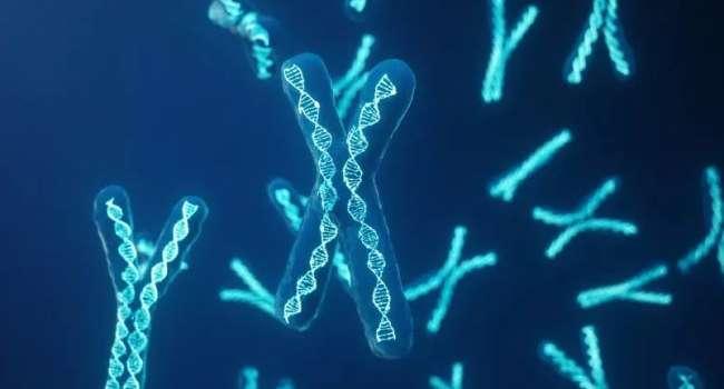 Американские биологи установили причину раннего старения мужчин и молодости женщин