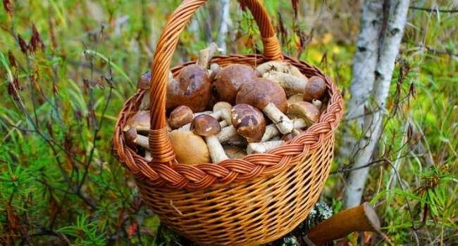 Учёные: регулярное употребление грибов рекордно снижает риск развития рака