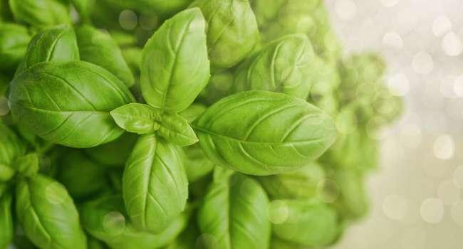 Медики назвали 4 растения, которые помогут от вздутия живота, многих видов кашля и аллергии