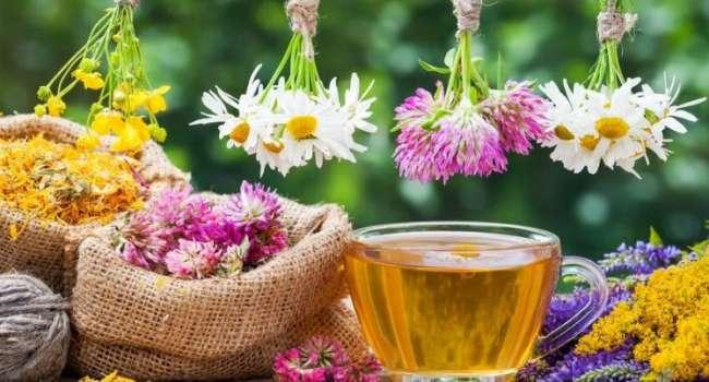 «Эффект не хуже, чем у лекарственных препаратов»: медики рассказали о самом полезном травяном чае