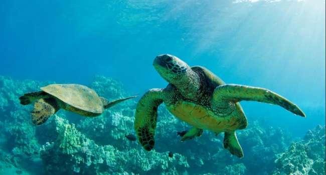«Используют силу океанского течения»: учёные исследовали поведение черепах в Саргассовом море