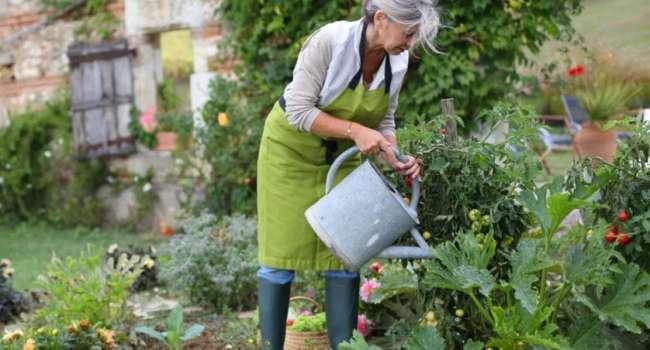 Эксперт рассказала дачникам, как вырастить экзотические культуры в огороде