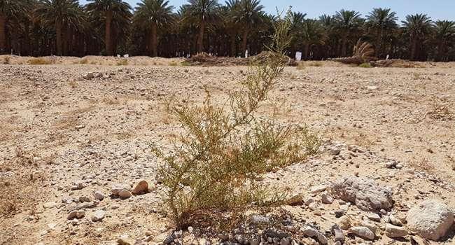 Нардеп: Украина, имея такие ресурсы, уступает Израилю по всем показателям, забывая, что это страна-пустыня