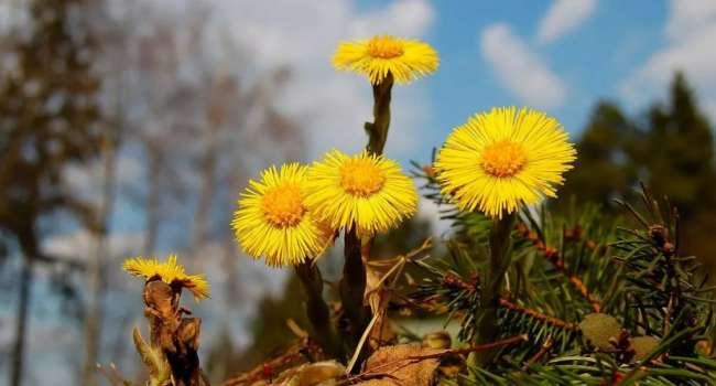 «Мать-и-мачеха и календула»: Врачи назвали полезные продукты и травы от насморка