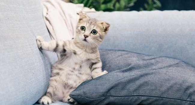 Котёнок в доме: как подготовиться к новому члену семьи?