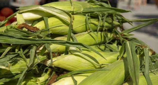 «Черешня по 7 гривен за штуку – ерунда»: Одесские продавцы снова отличились - на этот раз «золотой» кукурузой